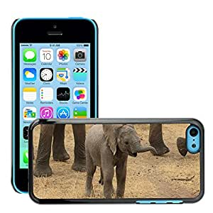 Hot Style Cell Phone PC Hard Case Cover // M00110319 Baby Elephant Elephant Tanzania // Apple iPhone 5C