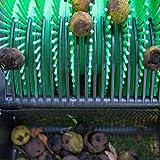 """Bag-A-Nut 36"""" Push Acorn Walnut Harvester - Also"""