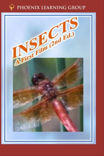Insects: A First Film by Phoenix Learning Group, Inc.