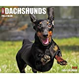 Just Dachshunds 2018 Daily Desk Boxed Calendar