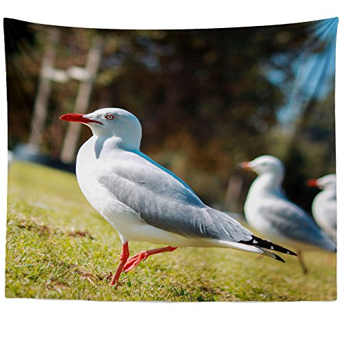 Sea Trio Gull (Westlake Art - Seagulls Bird - Wall Hanging Tapestry - Picture Photography Artwork Home Decor Living Room - 68x80 Inch (210BD))