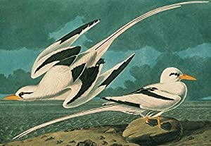 John James Audubon 1000 Piece Puzzle White-tailed Tropicbird by Pomegranate