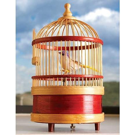 Amazon.es: Toyday Tradicional & T Classic - el Canto del pájaro en ...