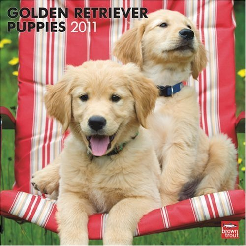Golden Retriever Puppies 2011 Square 12X12 Wall by BrownTrout Publishers Inc (2010-08-01)