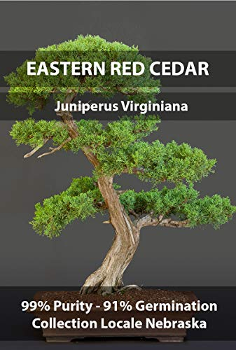 Eastern Red Cedar Premium Bonsai Seeds, Juniperus Virginiana Midwestern Crop Year 2016, Purity 99% Germination 91%, Collection Locale Nebraska, 15+ Pure Seeds per Packet!