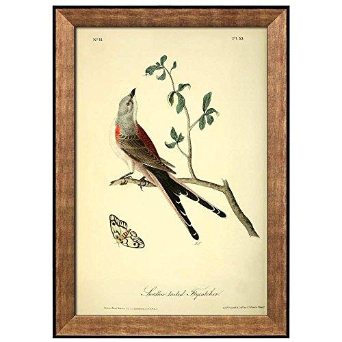 Beautiful Illustration Inside of an Elegant Frame of a Swallow Tailed Flycatcher by John James Audubon Framed Art