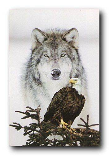 Gray Wolf Wall Decor American Bald Eagle Bird Picture Art Print Poster (16x20)