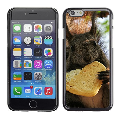 Premio Sottile Slim Cassa Custodia Case Cover Shell // V00003875 écureuil manger un cookie // Apple iPhone 6 6S 6G 4.7""