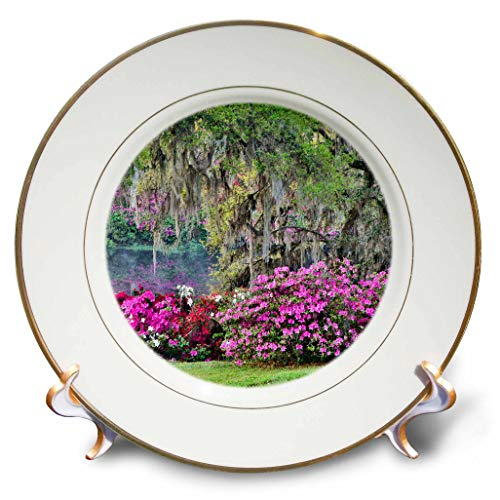 3dRose Danita Delimont - Gardens - USA, South Carolina, Charleston. Spring Flowers and Mossy Trees. - 8 inch Porcelain Plate (cp_315009_1)