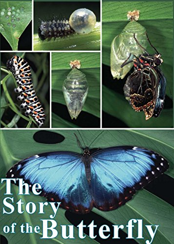 Arrangements Floral Art - The Story of the Butterfly