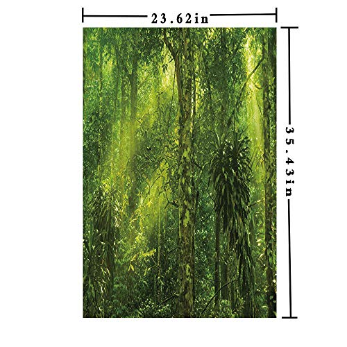 Removable Static Decorative Privacy Window Films 3D Printed, Tropical Tranquil Place with Lots of Green Trees Earthly Places Untouched Jungle Both Suitable for Home and Office, 23.62 x 35.43 inch,Ap (Hl Ap)