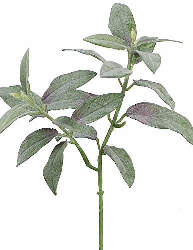 Allstate Floral & Craft Artificial Flocked Sage Leaves - 11 Tall