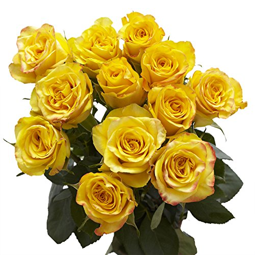 Top dozen yellow roses for 2020