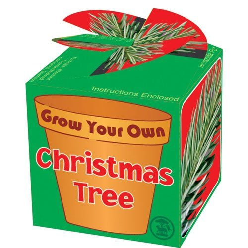 Grow Your Own Christmas Tree ()