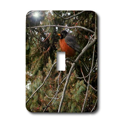 3d Rose 3dRose lsp_17526_1 Painted Robin Light Switch Cover