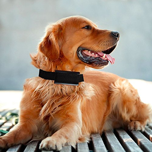 long range dog shock collar