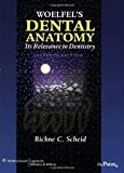 Woelfel's Dental Anatomy: Its Relevance to