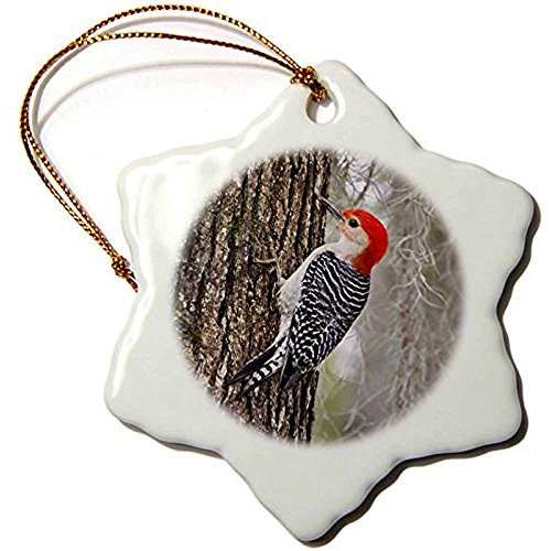 (Ditooms Red-Bellied Woodpecker Bird Male On Oak Tree Ditto-Snowflake Ornament 3-inch Porcelain)