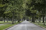 24 x 36 Giclee Print of Canopy of Trees on The Entry Road at Saint Mary's College which is a Four-Year Catholic Women's Liberal-Arts College in Notre Dame Indiana r20 42645 by Highsmith, Carol M.