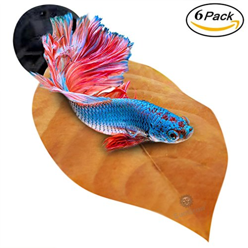 The Ultimate Guide To Betta Fish Toys What To Get Why You Need It