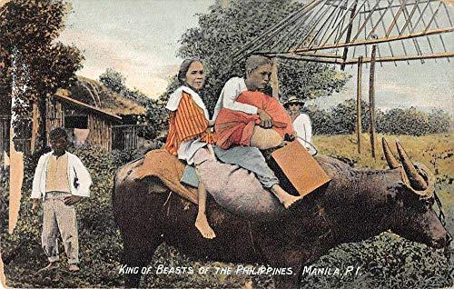Manila Philippines People Riding Water Buffalo Vintage Postcard JF686237