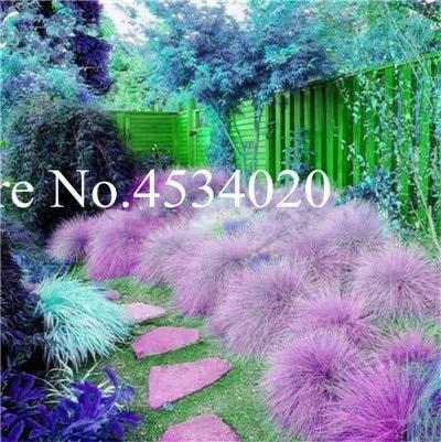Trees Ornamental Hardy Flowering - Kasuki 300 pcs Blue Fescue Grass - (Festuca glauca) Perennial Hardy Ornamental Plants Grass Bonsai for Flower Pot planters Bonsai Tree - (Color: 10)