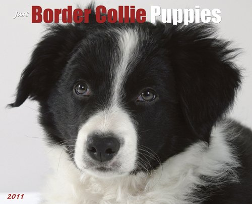 Calendar 2010 Wall Collie - Border Collie Puppies 2011 Wall Calendar (Just (Willow Creek))