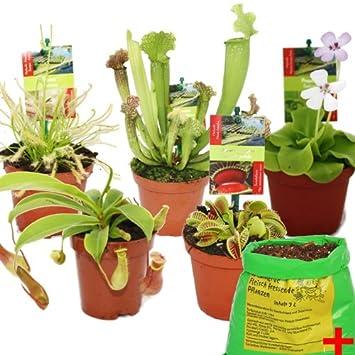 plante carnivore terre