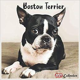 Boston Terrier Calendar 2021 Background