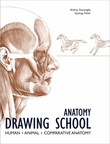 Anatomy Drawing School Human Animal Comparative Anatomy Andras