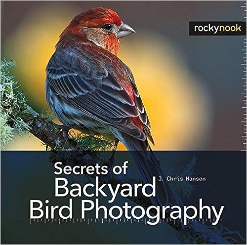 5 fundamentos de la buena fotografía del pájaro | Todo sobre las aves