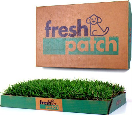 Fresh Patch Disposable Dog Potty with Real Grass Review