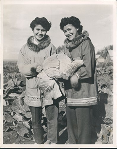 Homegrown Cabbage (1956 Home Grown Cabbage Girls Arctic Circle Hot Springs Fairbanks AK Press Photo)