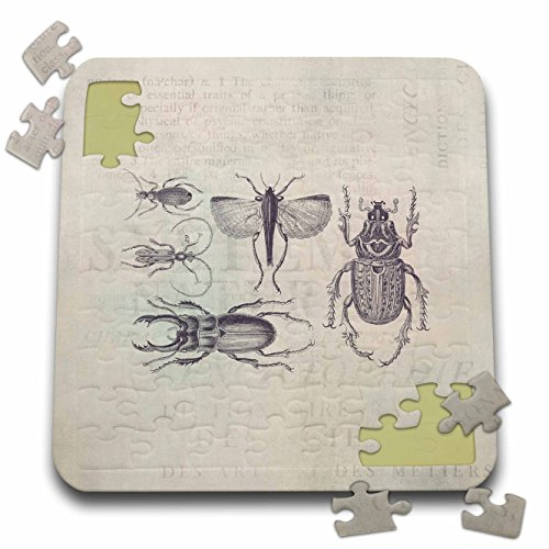 Bugs Cardboard Jigsaw Puzzle - 3dRose Andrea Haase Animals Illustration - Vintage Bugs And Beetles Illustration - 10x10 Inch Puzzle (pzl_282466_2)
