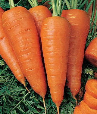 Sweet Treat Hybrid Carrot 600 Seeds (Non-Gmo) Upc 646263362266 + 2 Plant Markers - Delicious Crunch