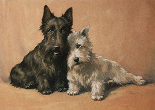 Scottish Terriers (dogs): Christopher Gifford Ambler : circa 1920: Art Print (Scottish Art Dog Terrier)