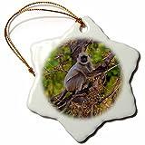 3dRose Danita Delimont - Primates - India, Bandhavgarh Tiger Reserve. Hanuman langur in a tree. - 3 inch Snowflake Porcelain Ornament (orn_276802_1)