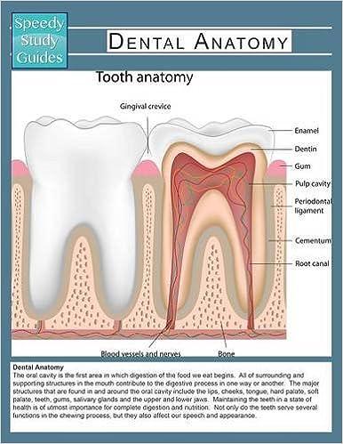 Dental Anatomy (Speedy Study Guide): 9781633838895: Medicine ...