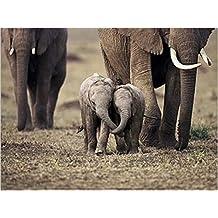 Posters: Elephants Poster Art Print - Baby Elephants, Masaï Mara, Kenya (16 x 12 inches)