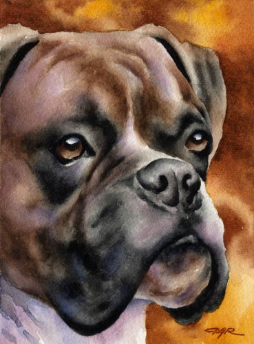 Boxer Art Print by Watercolor Artist DJ Rogers