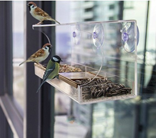 Homeself Clear Window Mounted Bird Feeder, Holds Bird Seed & Wild Birds - Clear, Removable Tray, Drain Holes, 3 Heavy Duty Suction Cups, Best Gift For Bird Lovers, Kids & Pets (Green) by Homeself