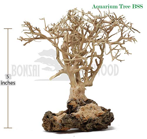 Bonsai Driftwood Aquarium Tree (5 Inch Height) Natural, Handcrafted Fish Tank Decoration | Helps Balance Water pH Levels, Stabilizes Environments | Easy to Install ()
