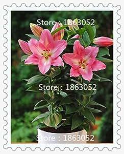 100 PC / Plantas Bolsa de tiesto de flores del lirio Semillas semillas de flor del lirio del perfume Purificar cubierta Bonsai mezcla de aire Colores