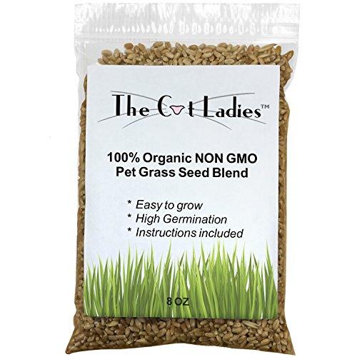 100-Organic-Cat-Grass-Seed-NON-GMO