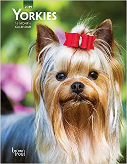 Yorkies 2019 6 X 775 Inch Weekly Engagement Calendar Animals Small