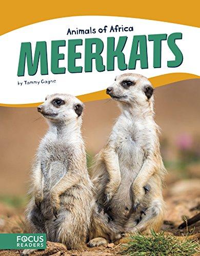 Meerkats (Animals of Africa) by Focus Readers