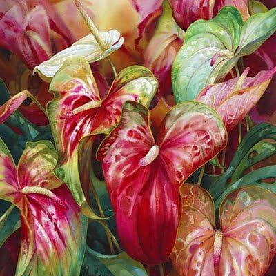 Rare Rose Anthurium Graines dint/érieur en Pot Culture hydroponique Fleurs Plantes Anthurium Andraeanum 100/Particules//Sac Show in Picture 1
