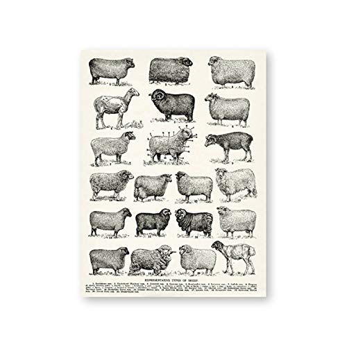Breeds of Sheep Vintage Poster Prints Farmhouse Wall Art Types of Sheep Canvas Painting Cottage Ranch Farming Decor Farmer Gifts,20X25 cm No - Poster Breeds Sheep