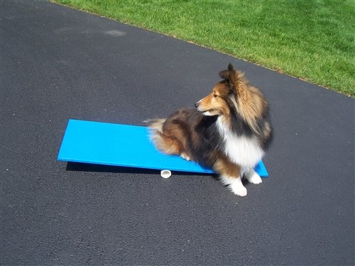 Agility Gear Tippy Board - Puppy Teeter Teeter Totter Dog