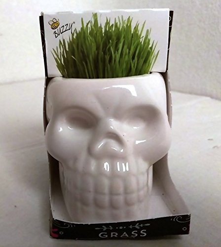 Price comparison product image Spring Garden Ceramic Home Decor Decoration Grass Grow Kit Skull